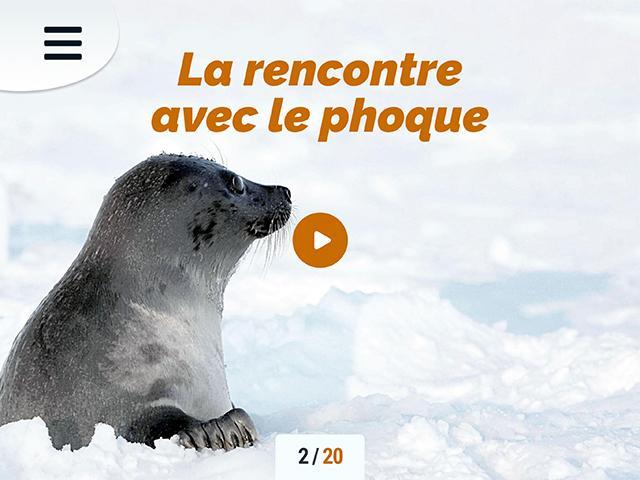 Phoque - FR